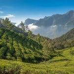 Munnar, Teeplantagen