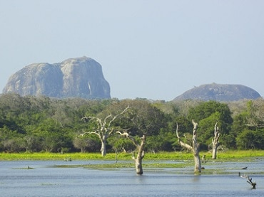 Rundreise Sri Lanka Elephanten Berg