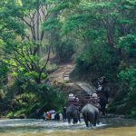 Chitwan_Elefantensafari