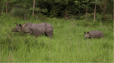 Chitwan Nationalpark Nepal Newsletter
